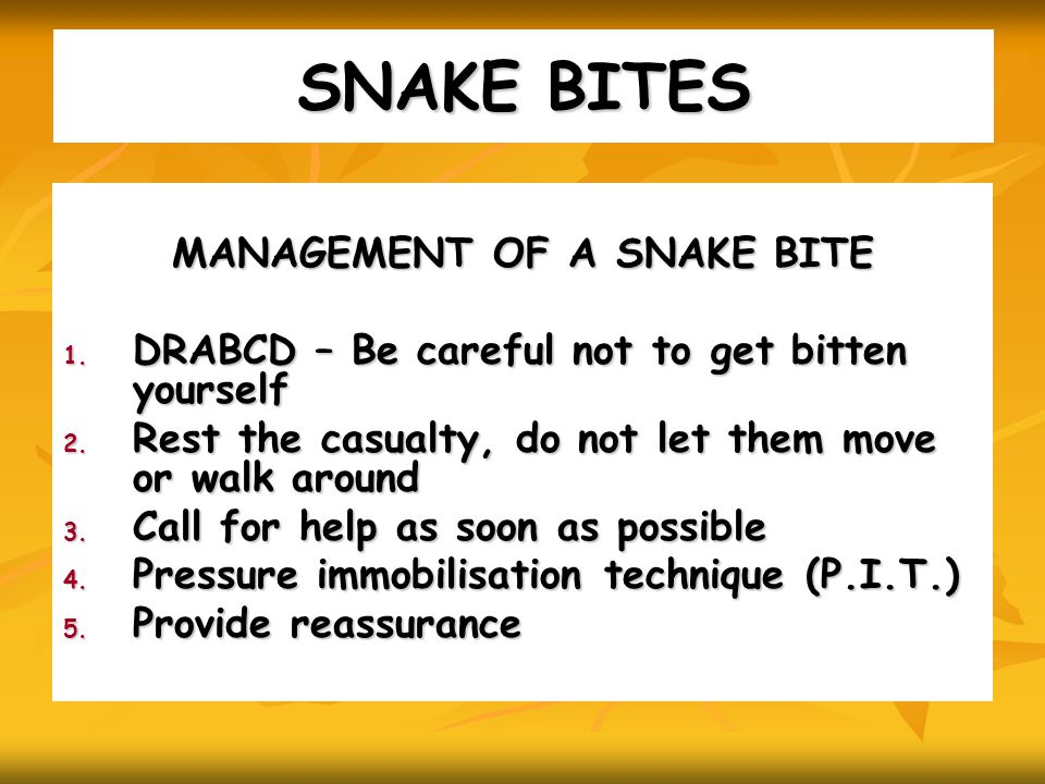 SNAKE BITES MANAGEMENT OF A SNAKE BITE 1. DRABCD – Be careful not to get bitten yourself 2.