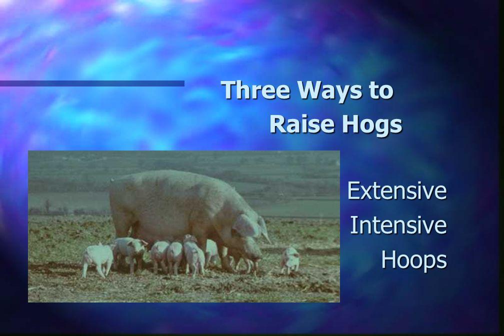 Three Ways to Raise Hogs ExtensiveIntensiveHoops