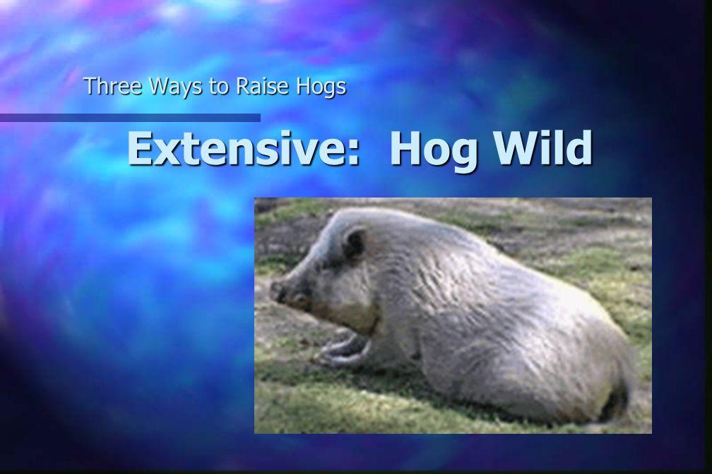 Extensive: Hog Wild