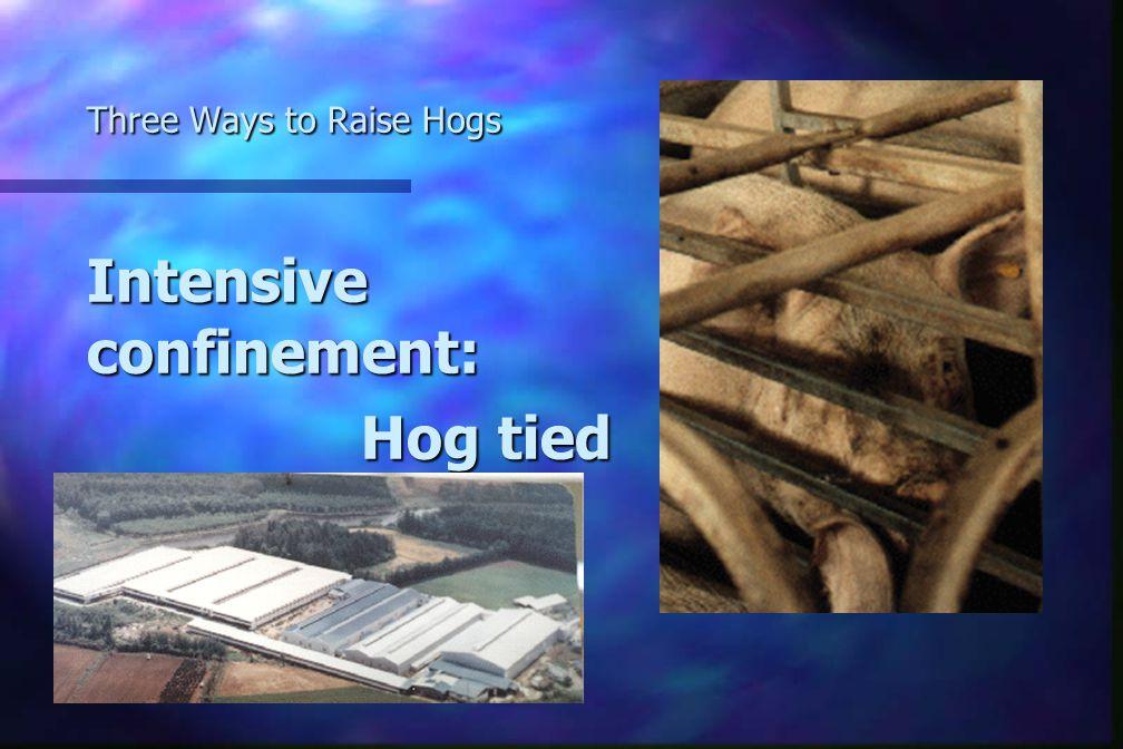 Three Ways to Raise Hogs Intensive confinement: Hog tied Hog tied