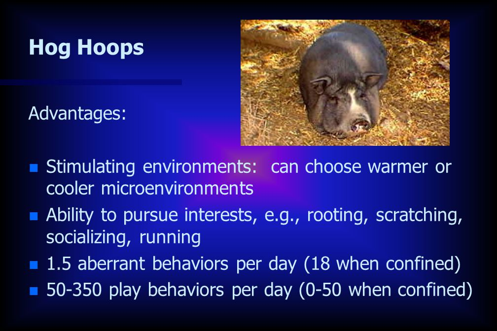 Hog Hoops Advantages: n n Stimulating environments: can choose warmer or cooler microenvironments n n Ability to pursue interests, e.g., rooting, scratching, socializing, running n n 1.5 aberrant behaviors per day (18 when confined) n n 50-350 play behaviors per day (0-50 when confined)
