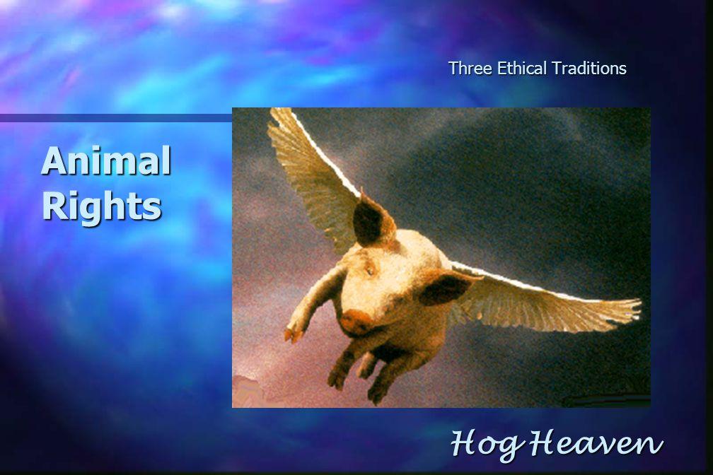 Three Ethical Traditions AnimalRights Hog Heaven Hog Heaven