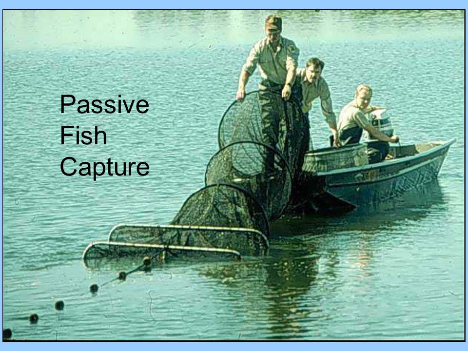 Passive Fish Capture