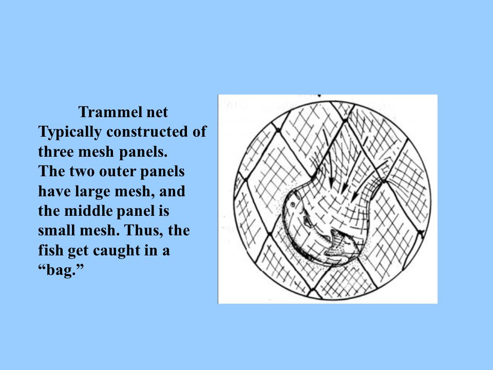 Trammel net Typically constructed of three mesh panels. The two outer panels have large mesh, and the middle panel is small mesh. Thus, the fish get c