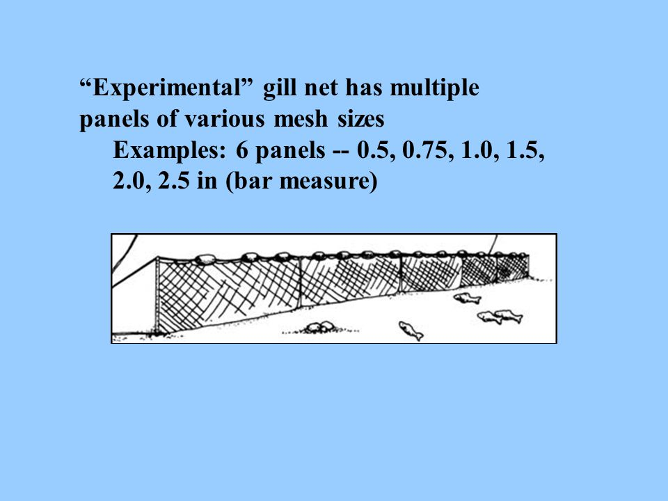 """""""Experimental"""" gill net has multiple panels of various mesh sizes Examples: 6 panels -- 0.5, 0.75, 1.0, 1.5, 2.0, 2.5 in (bar measure)"""