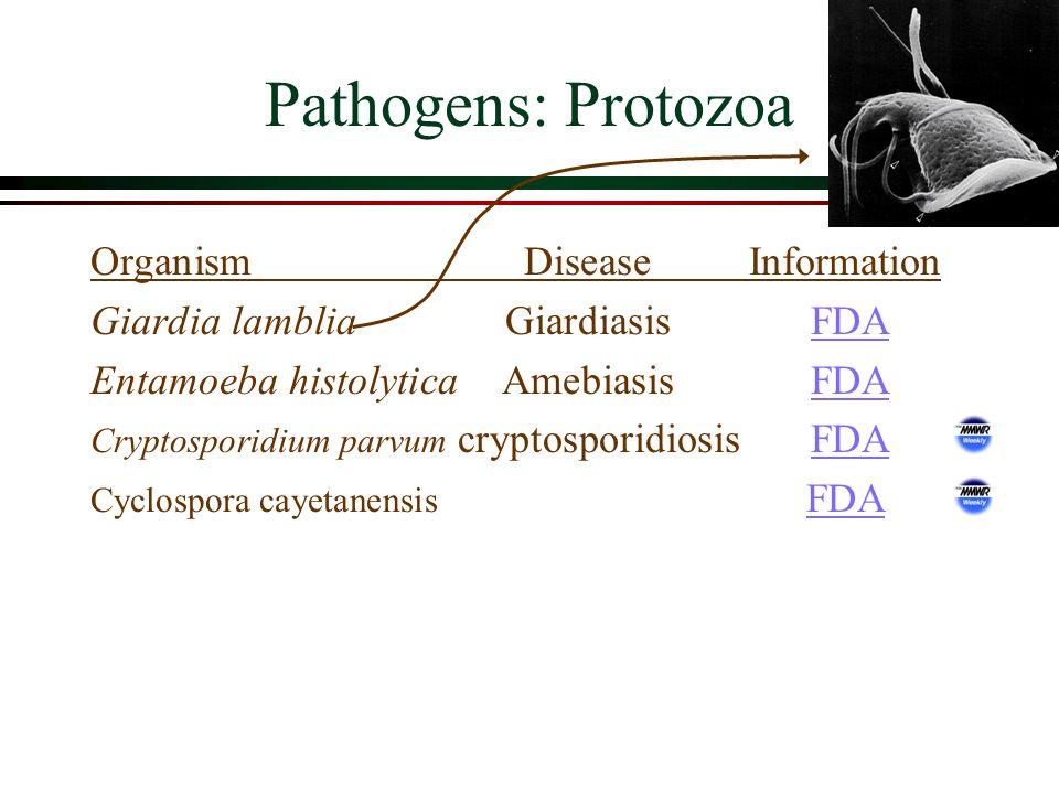 Pathogens: Protozoa OrganismDiseaseInformation Giardia lambliaGiardiasis FDAFDA Entamoeba histolyticaAmebiasis FDAFDA Cryptosporidium parvum cryptosporidiosis FDAFDA Cyclospora cayetanensis FDAFDA