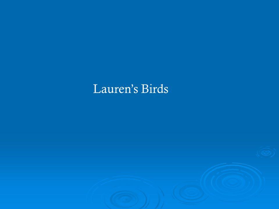 Lauren's Birds