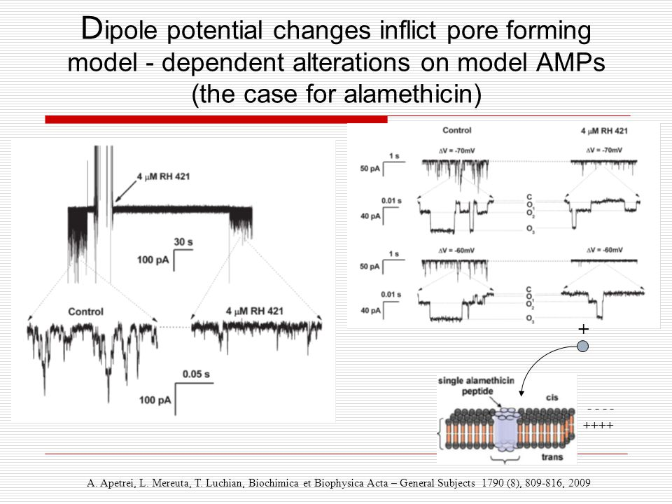 D ipole potential changes inflict pore forming model - dependent alterations on model AMPs (the case for alamethicin) A. Apetrei, L. Mereuta, T. Luchi