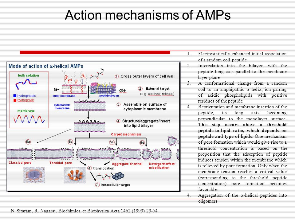 Action mechanisms of AMPs N. Sitaram, R.