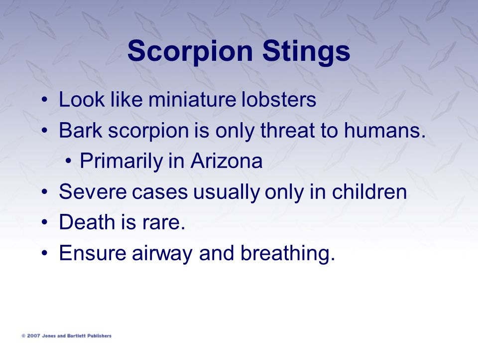 Scorpion Stings Look like miniature lobsters Bark scorpion is only threat to humans.