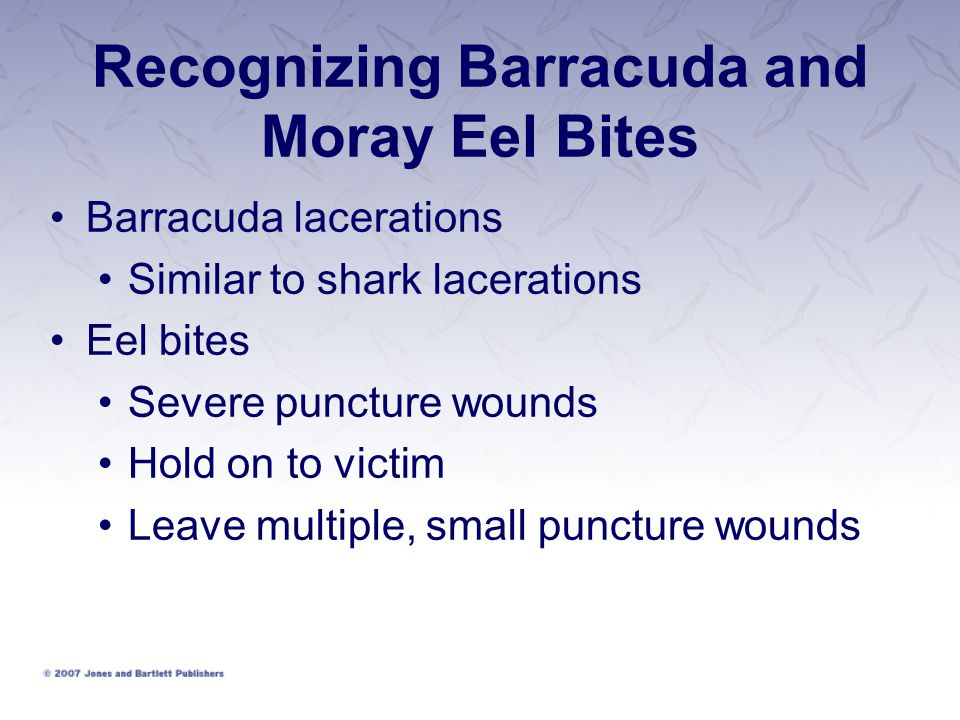 Recognizing Barracuda and Moray Eel Bites Barracuda lacerations Similar to shark lacerations Eel bites Severe puncture wounds Hold on to victim Leave multiple, small puncture wounds