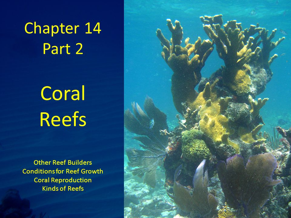 Chapter 14 Part 2 Coral Reefs Other Reef Builders Conditions for Reef Growth Coral Reproduction Kinds of Reefs