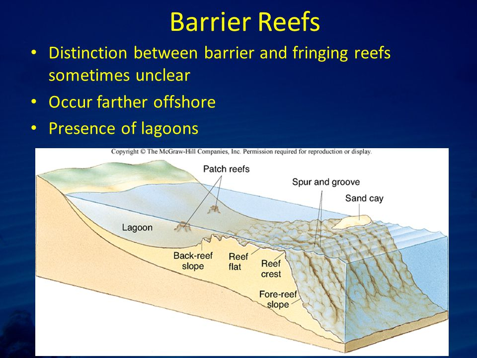 Barrier Reefs Distinction between barrier and fringing reefs sometimes unclear Occur farther offshore Presence of lagoons