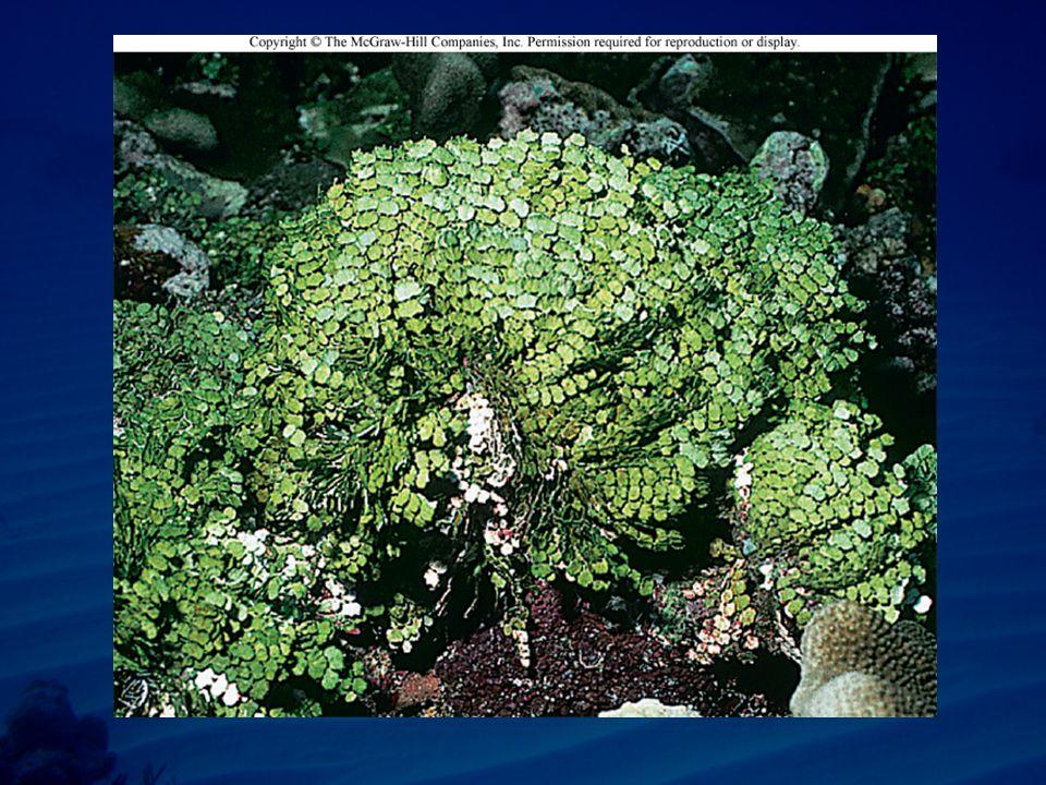Sponges Bind sediments into place www.johneasley.com