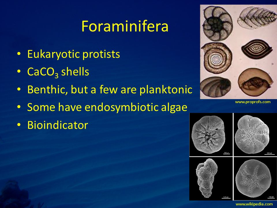 Endolithic organisms – Beneath the surface of the coral skeleton.