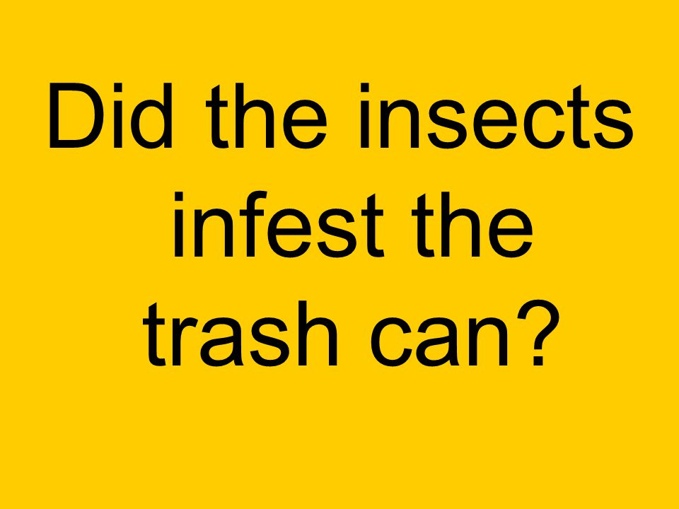 Did the insects infest the trash can?