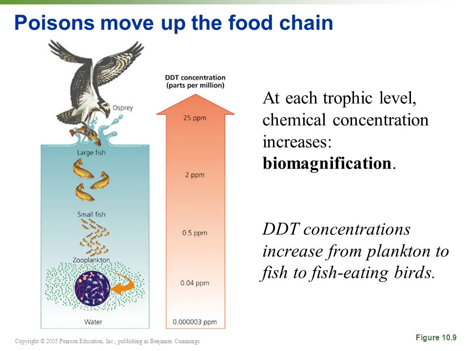 Copyright © 2005 Pearson Education, Inc., publishing as Benjamin Cummings Poisons move up the food chain At each trophic level, chemical concentration