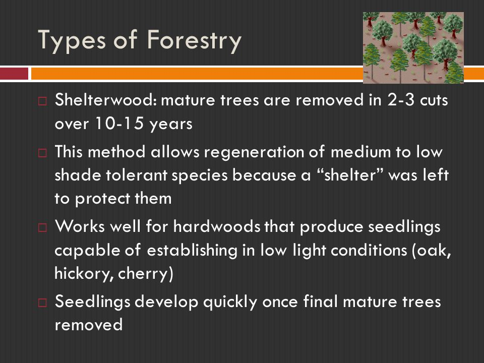 Types of Forestry  Shelterwood: mature trees are removed in 2-3 cuts over 10-15 years  This method allows regeneration of medium to low shade tolerant species because a shelter was left to protect them  Works well for hardwoods that produce seedlings capable of establishing in low light conditions (oak, hickory, cherry)  Seedlings develop quickly once final mature trees removed