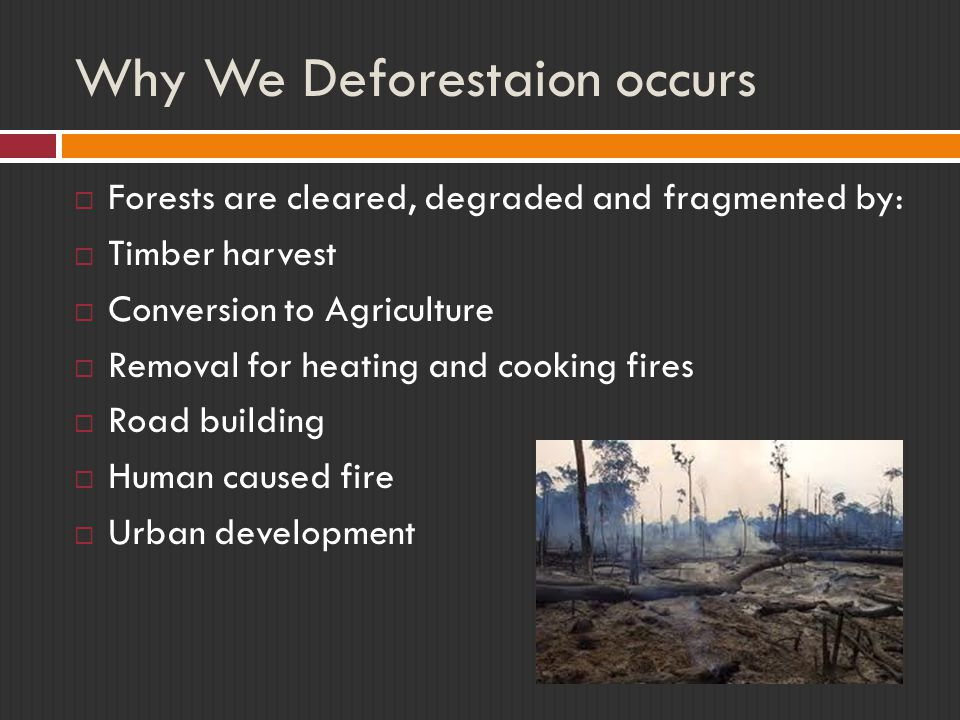 Why We Deforestaion occurs  Forests are cleared, degraded and fragmented by:  Timber harvest  Conversion to Agriculture  Removal for heating and c