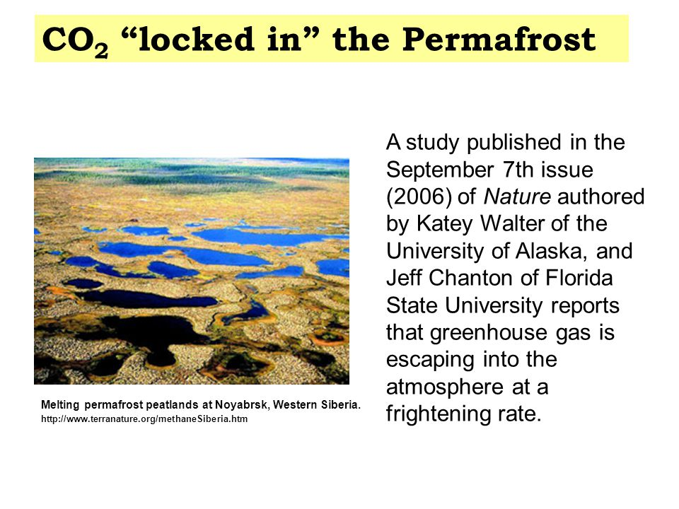 Melting permafrost peatlands at Noyabrsk, Western Siberia. http://www.terranature.org/methaneSiberia.htm A study published in the September 7th issue