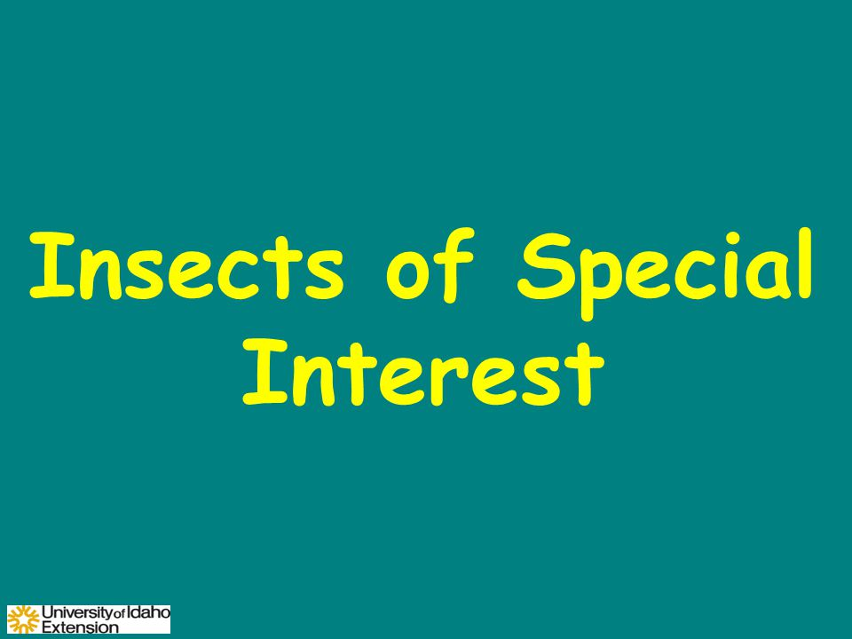Insects of Special Interest