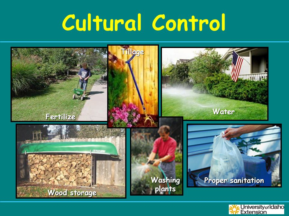 Cultural Control Proper sanitation Fertilize Water Wood storage Washing plants Tillage
