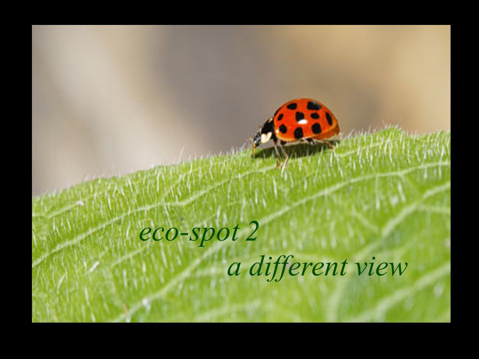 eco-spot 2 a different view