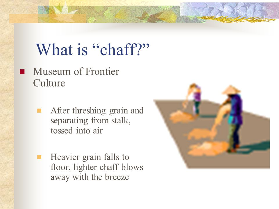What is chaff Museum of Frontier Culture After threshing grain and separating from stalk, tossed into air Heavier grain falls to floor, lighter chaff blows away with the breeze