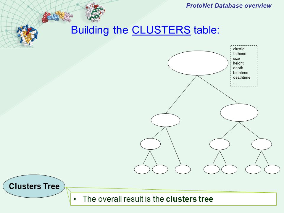ProtoNet Database overview The overall result is the clusters tree Building the CLUSTERS table: Clusters Tree clustid fatherid size height depth birthtime deathtime …