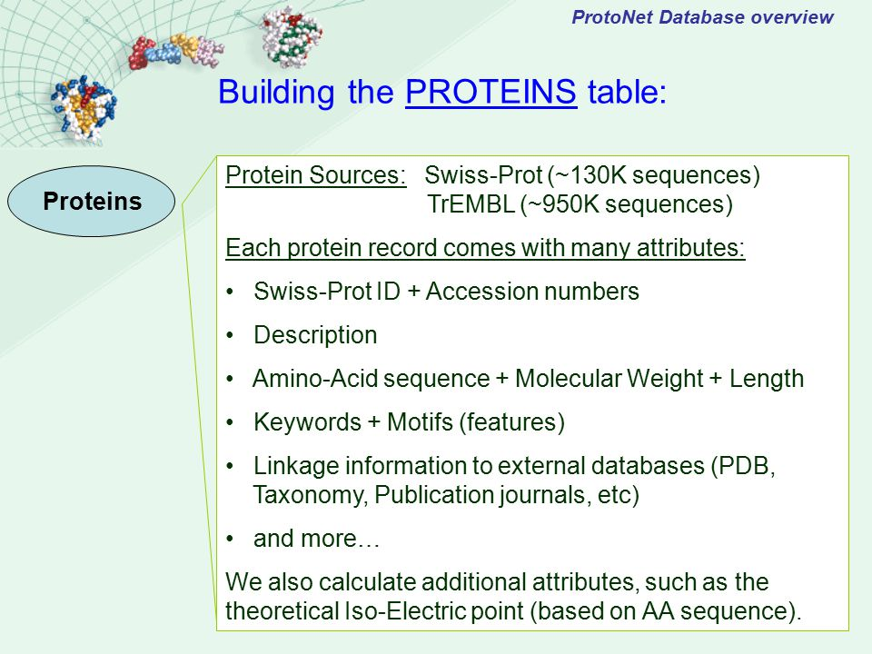 ProtoNet Database overview Building the PROTEINS table: Proteins Protein Sources: Swiss-Prot (~130K sequences) TrEMBL (~950K sequences) Each protein record comes with many attributes: Swiss-Prot ID + Accession numbers Description Amino-Acid sequence + Molecular Weight + Length Keywords + Motifs (features) Linkage information to external databases (PDB, Taxonomy, Publication journals, etc) and more… We also calculate additional attributes, such as the theoretical Iso-Electric point (based on AA sequence).