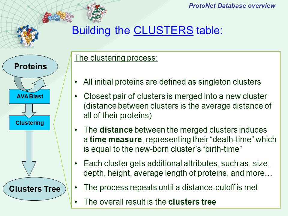 AVA Blast ProtoNet Database overview Proteins The clustering process: All initial proteins are defined as singleton clusters Closest pair of clusters is merged into a new cluster (distance between clusters is the average distance of all of their proteins) The distance between the merged clusters induces a time measure, representing their death-time which is equal to the new-born cluster's birth-time Each cluster gets additional attributes, such as: size, depth, height, average length of proteins, and more… The process repeats until a distance-cutoff is met The overall result is the clusters tree Building the CLUSTERS table: Clustering Clusters Tree