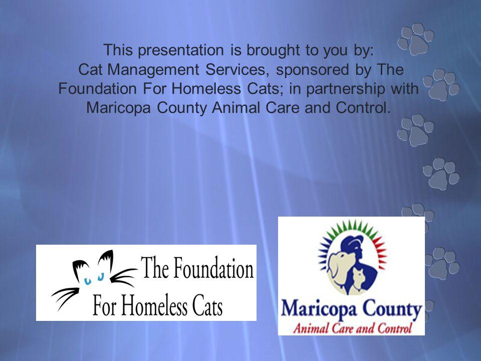 What is Your Current Cat Management Program?