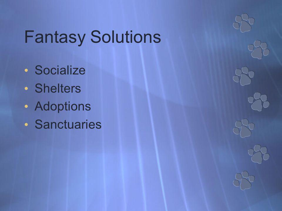 Fantasy Solutions Socialize Shelters Adoptions Sanctuaries