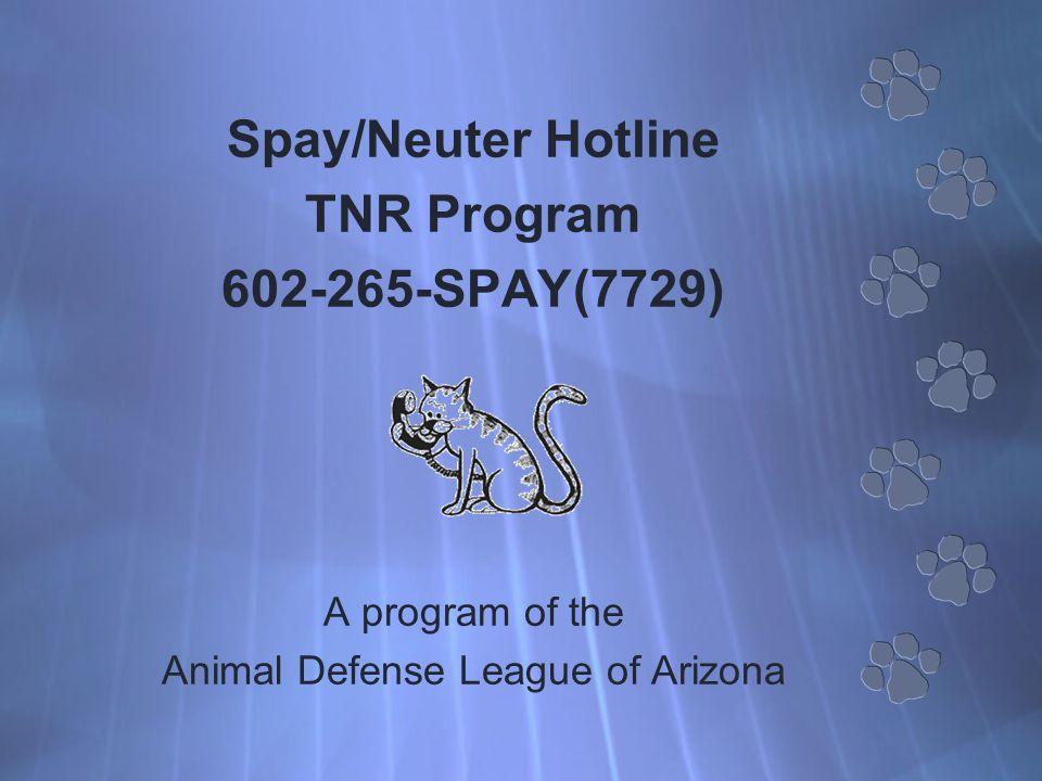 Spay/Neuter Hotline TNR Program 602-265-SPAY(7729) A program of the Animal Defense League of Arizona