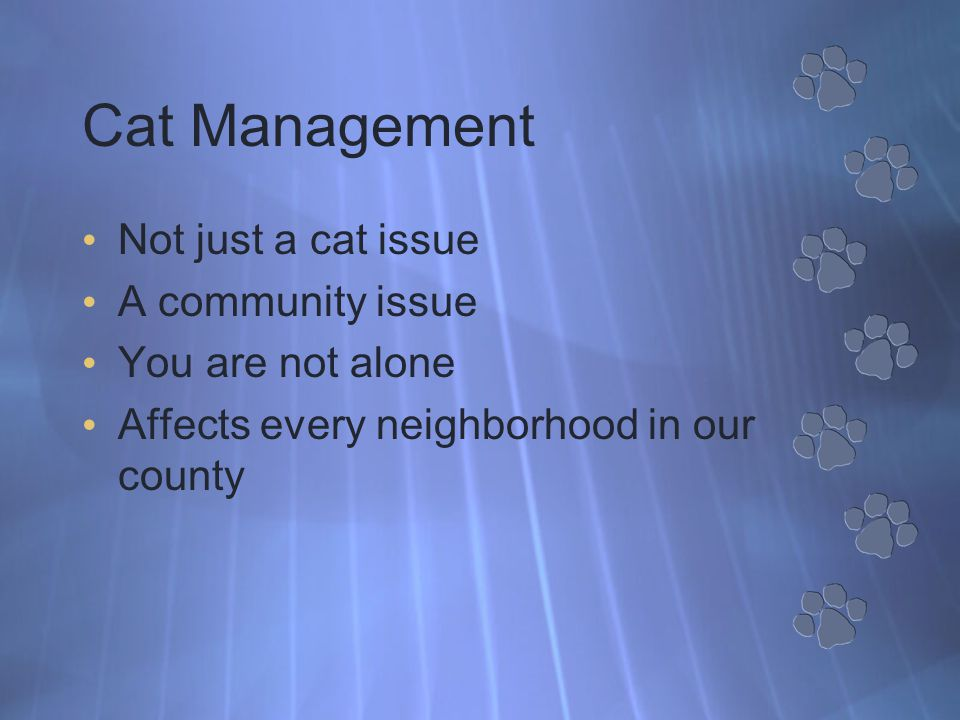 Cat Management Not just a cat issue A community issue You are not alone Affects every neighborhood in our county