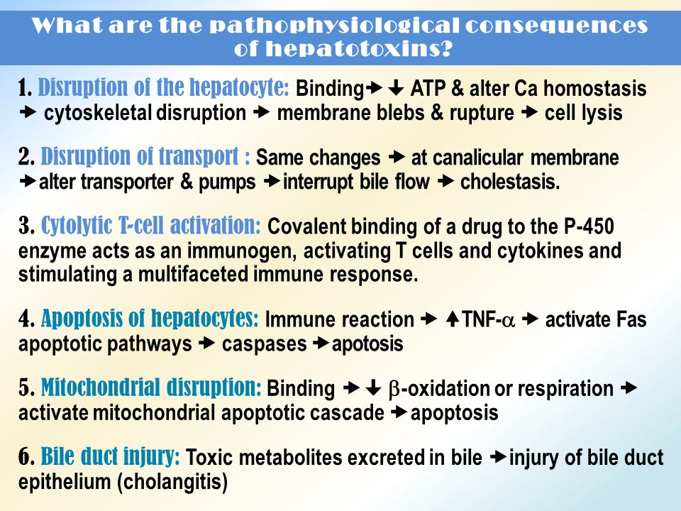 What are the pathophysiological consequences of hepatotoxins.