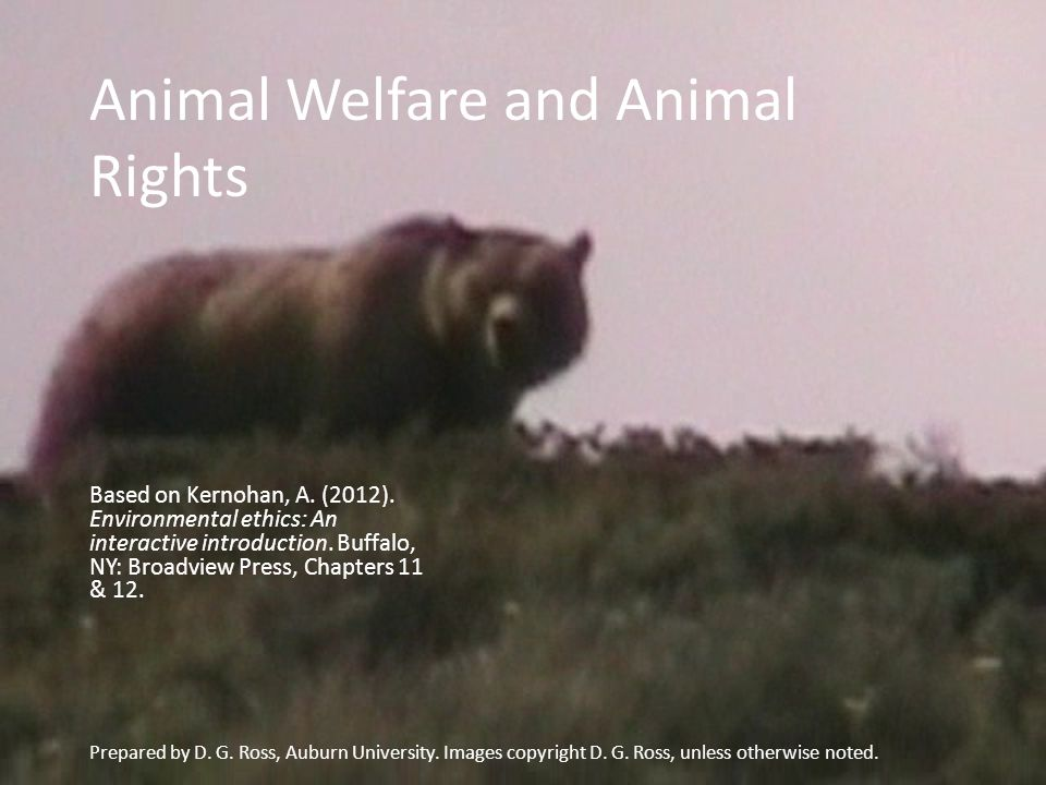 How does our understanding of the moral status of animals affect our perceptions of global environmental policies.