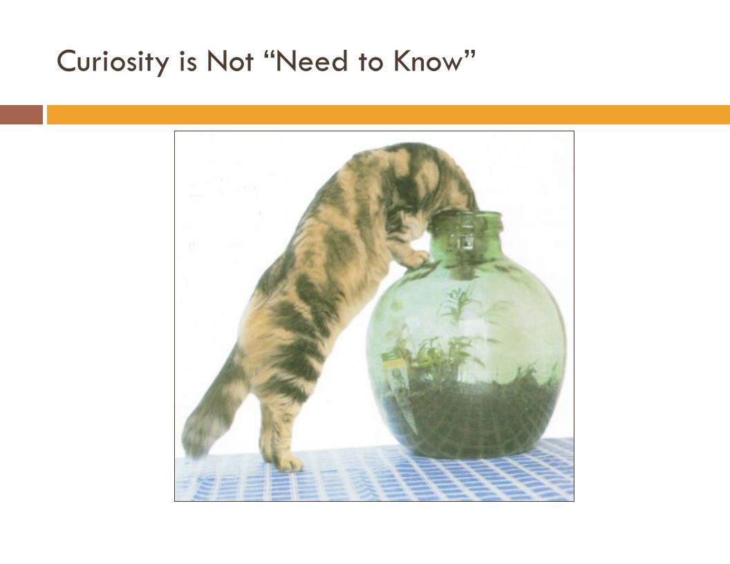 Curiosity is Not Need to Know