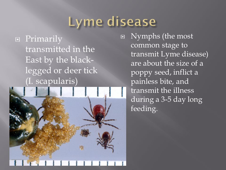  Primarily transmitted in the East by the black- legged or deer tick (I.