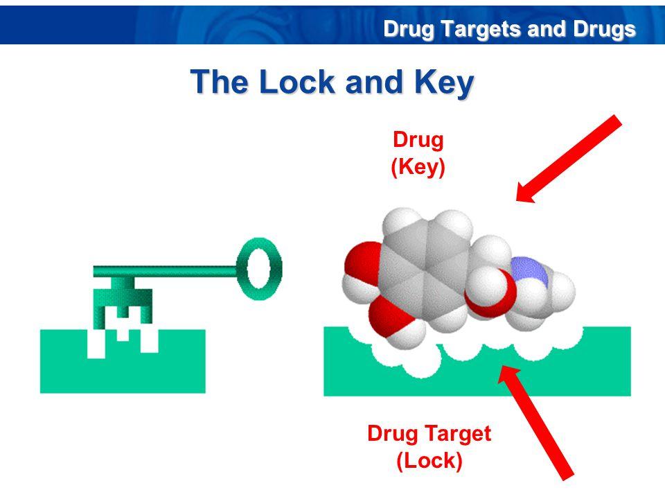 The Lock and Key Drug Target (Lock) Drug (Key) Drug Targets and Drugs