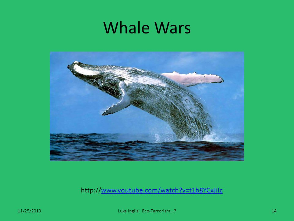 Whale Wars 11/25/2010Luke Inglis: Eco-Terrorism...?14 http://www.youtube.com/watch?v=t1b8YCxJiIcwww.youtube.com/watch?v=t1b8YCxJiIc