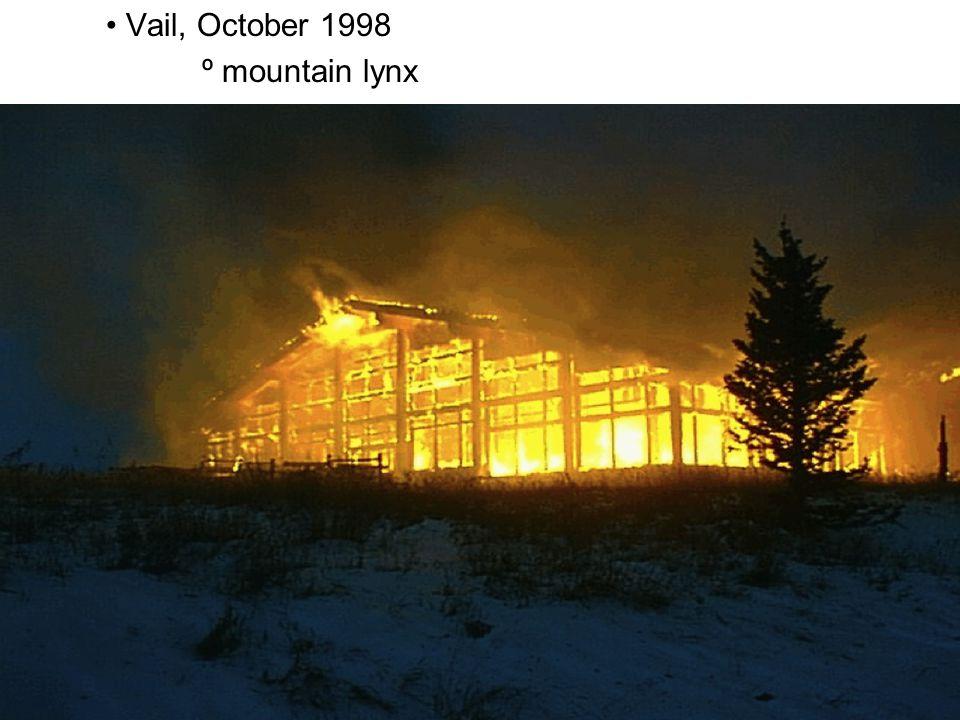 Vail, October 1998 º mountain lynx