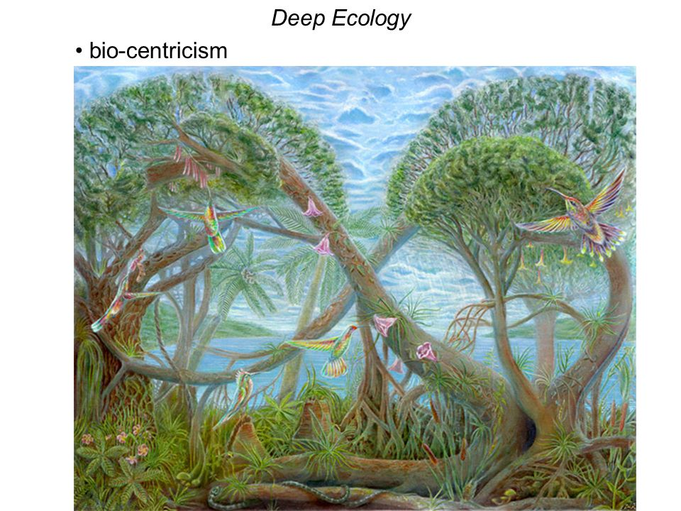Deep Ecology bio-centricism