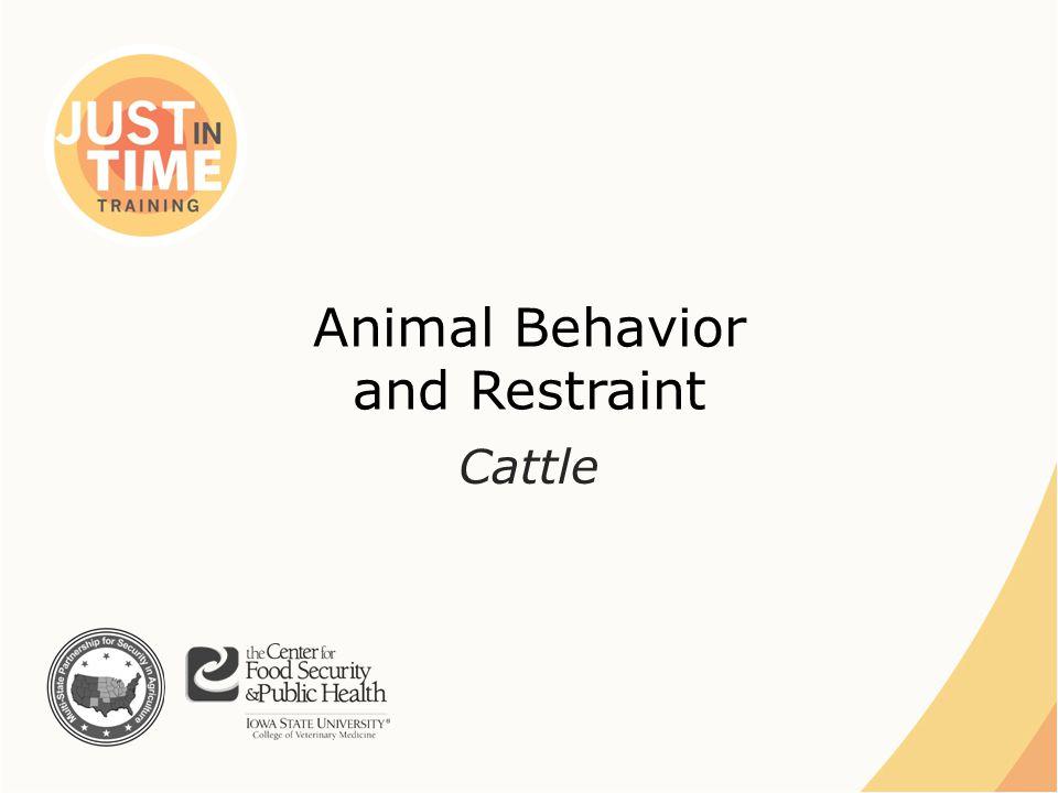 Animal Behavior and Restraint Cattle