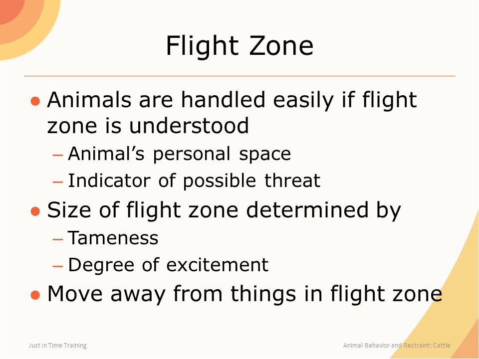 Flight Zone ●Animals are handled easily if flight zone is understood – Animal's personal space – Indicator of possible threat ●Size of flight zone det