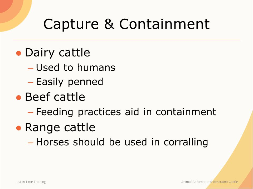 Capture & Containment ●Dairy cattle – Used to humans – Easily penned ●Beef cattle – Feeding practices aid in containment ●Range cattle – Horses should