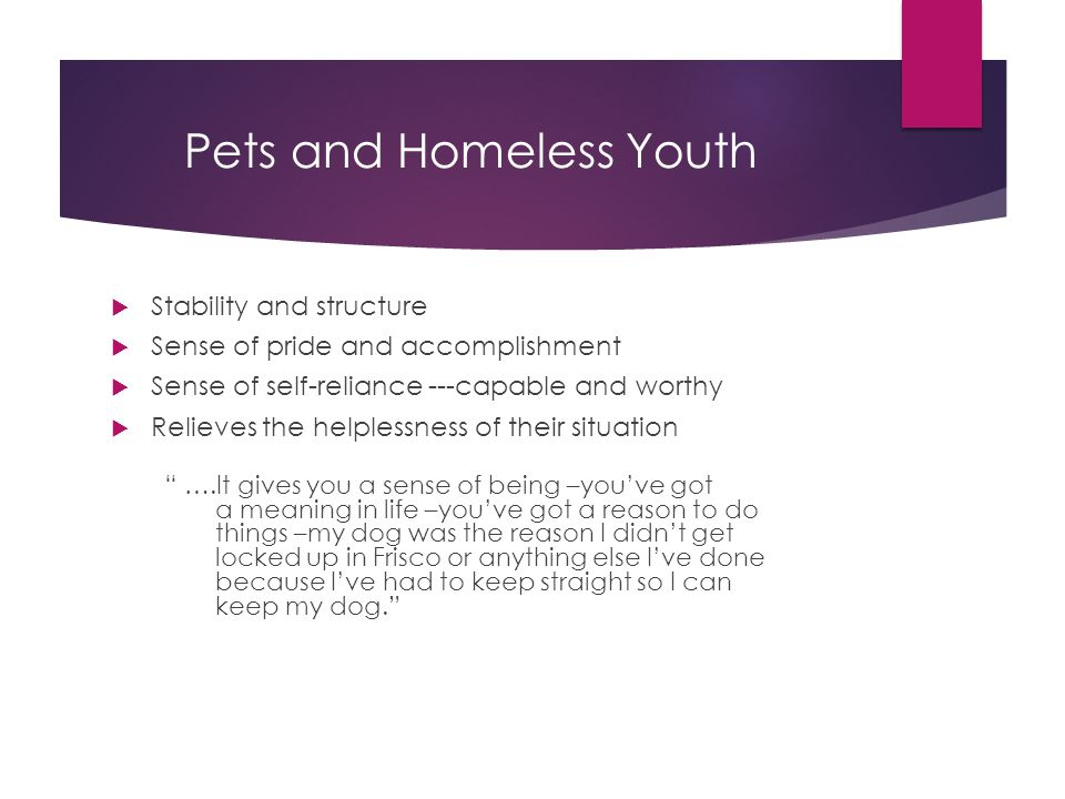 Pets and Homeless Youth  Stability and structure  Sense of pride and accomplishment  Sense of self-reliance ---capable and worthy  Relieves the helplessness of their situation ….It gives you a sense of being –you've got a meaning in life –you've got a reason to do things –my dog was the reason I didn't get locked up in Frisco or anything else I've done because I've had to keep straight so I can keep my dog.