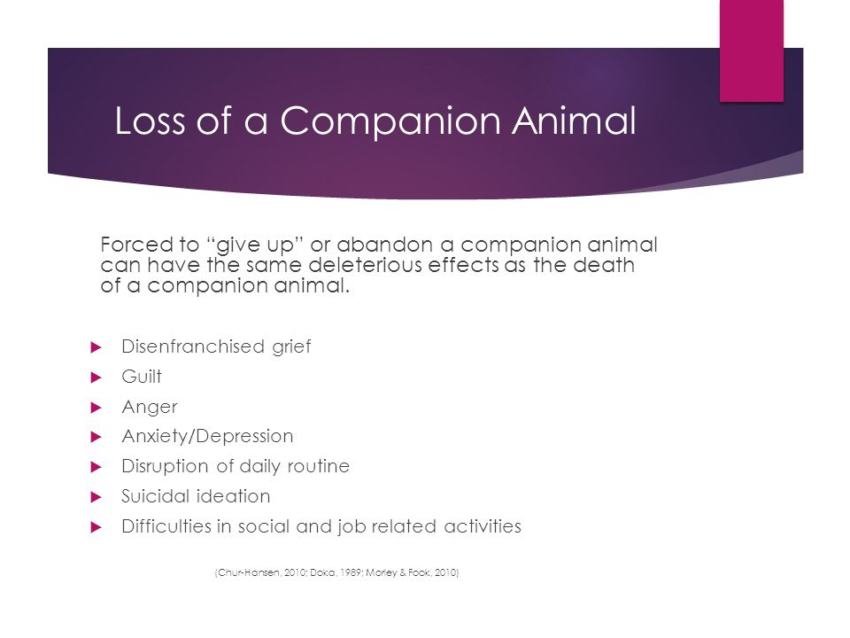Loss of a Companion Animal Forced to give up or abandon a companion animal can have the same deleterious effects as the death of a companion animal.