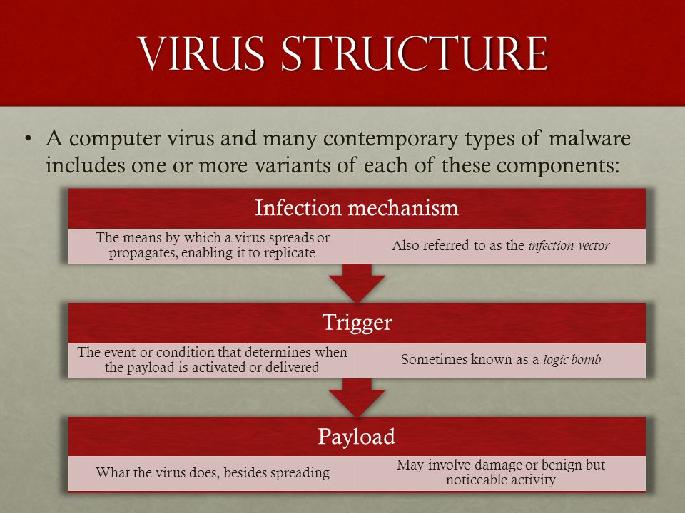 Virus Structure A computer virus and many contemporary types of malware includes one or more variants of each of these components:A computer virus and