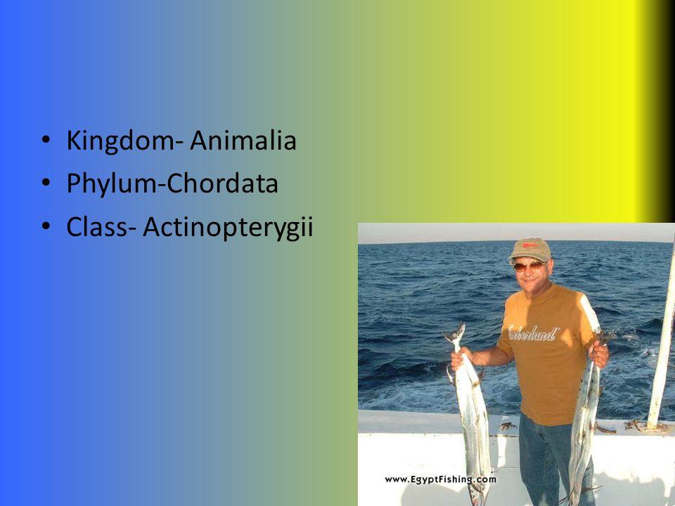 Kingdom- Animalia Phylum-Chordata Class- Actinopterygii